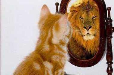lion-in-the-mirror